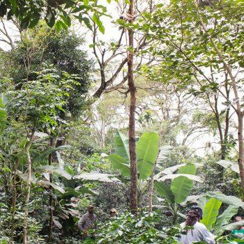 Agricultura regenerativa: preservar e recuperar é preciso!