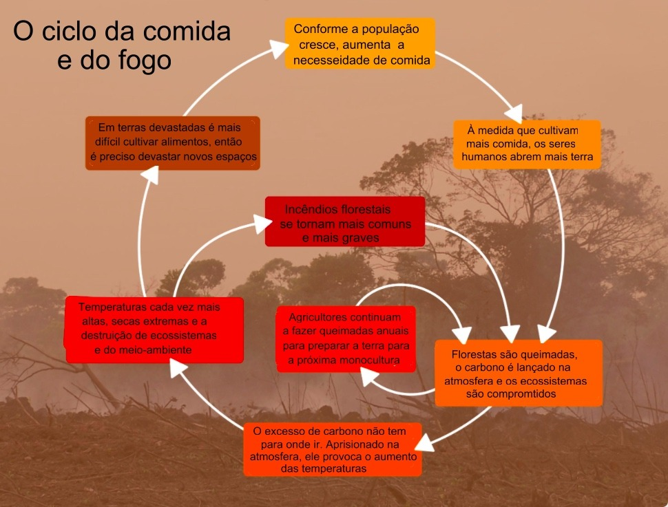 Desmatamento e grandes incêndios destroem florestas-4