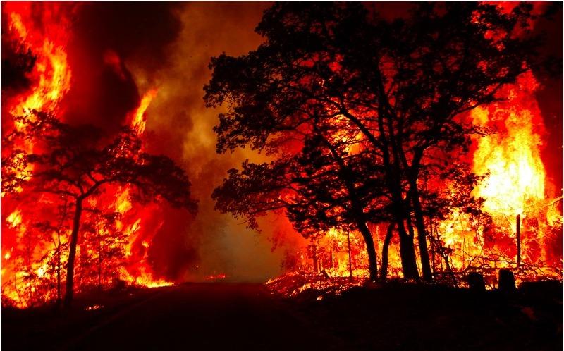 Grandes incêndios destroem florestas-2