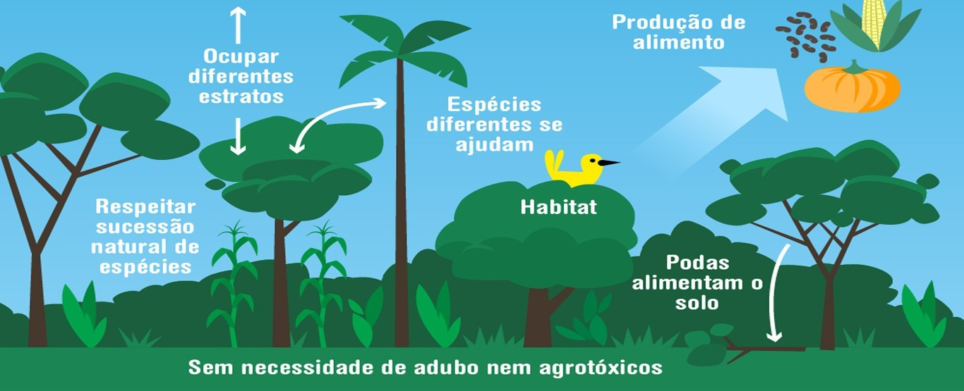 A agrofloresta e a agricultura regenerativa ajudam a evitar grande incêndios que destroem florestas-7