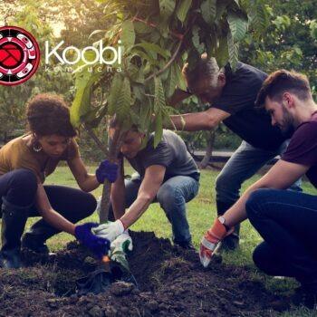 Plantar uma árvore, bom para a alma e para o planeta