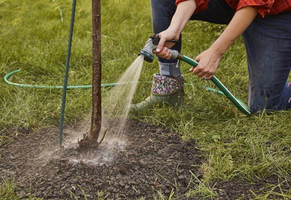 Plantar uma árvore - 8
