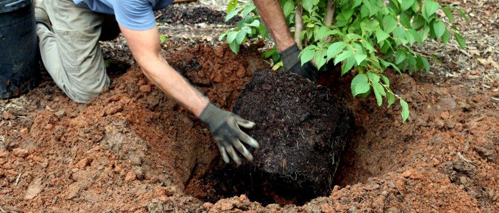 Plantar uma árvore - 6