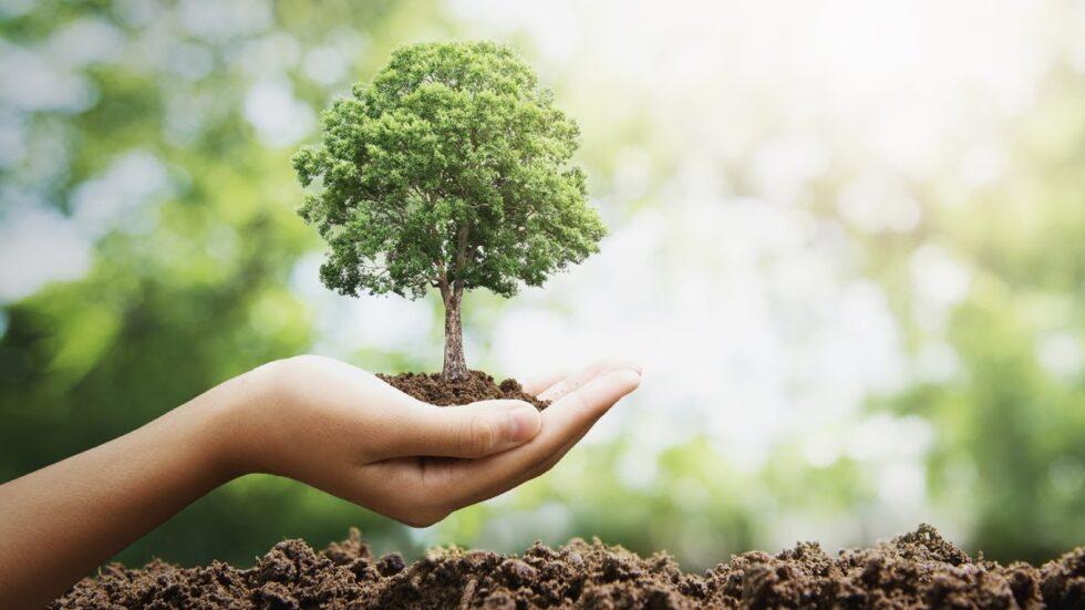 Plantar uma árvore - 2