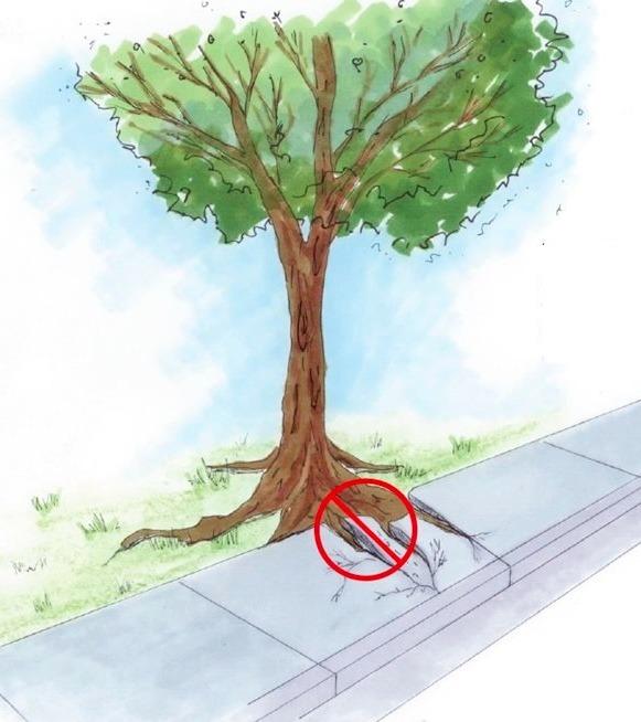Plantar uma árvore - 5