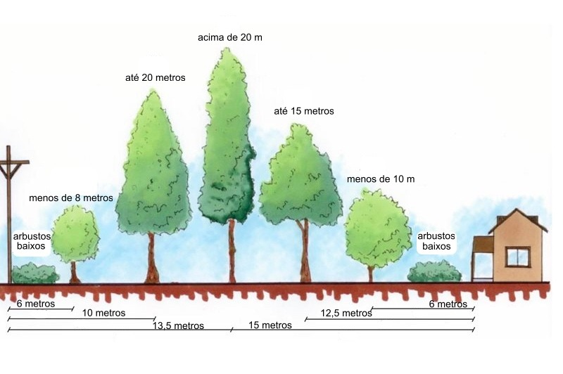 Plantar uma árvore - 4