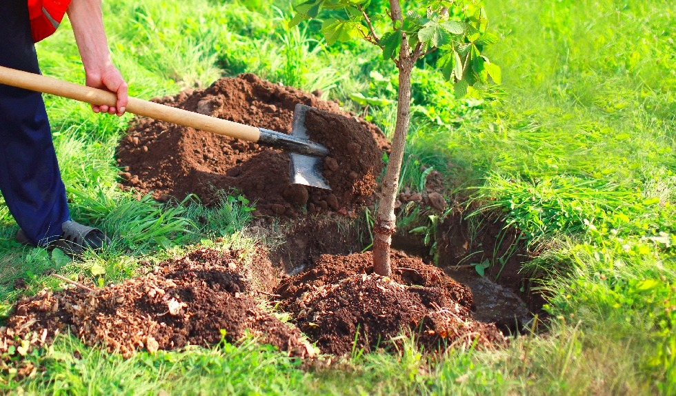Plantar uma árvore - 3